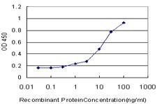 ELISA - Anti-STT3A antibody [4D4] (ab116213)