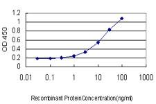Sandwich ELISA - Anti-RALB antibody [4D1] (ab117742)