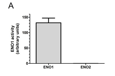 Functional Studies - ENO1 Human Activity Assay Kit (ab117994)
