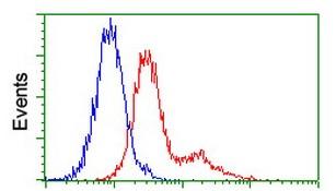Flow Cytometry - Anti-hnRNP F antibody [5F5] (ab118028)