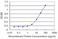 Sandwich ELISA - Anti-MGC12981 antibody (ab118081)