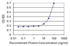 Sandwich ELISA - Anti-B3GNT antibody [2H6] (ab118083)