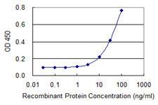 Western blot - Anti-IQCH antibody (ab118092)