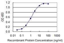 Sandwich ELISA - Anti-ZAN antibody (ab118116)
