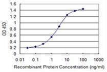 Sandwich ELISA - Anti-ENAM antibody [2C12] (ab118134)