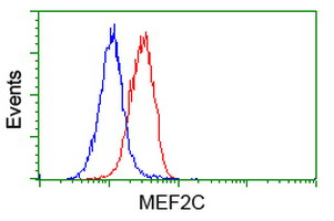 Flow Cytometry - Anti-MEF2C antibody [4B10] (ab118406)