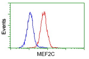Flow Cytometry - MEF2C antibody [4B10] (ab118406)