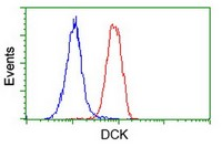 Flow Cytometry - Anti-DCK antibody [16E12] (ab118994)