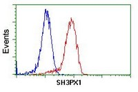 Flow Cytometry - Anti-SH3PX1 antibody [2F1] (ab118996)