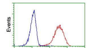 Flow Cytometry - Anti-ITM2B antibody [1C11] (ab119044)