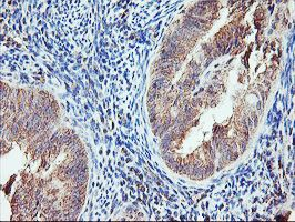 Immunohistochemistry (Formalin/PFA-fixed paraffin-embedded sections) - Anti-AGPAT5 antibody [1D4] (ab119366)