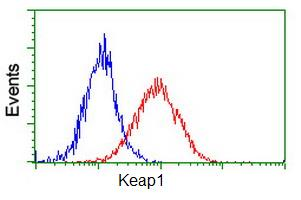 Flow Cytometry - Anti-Keap1 antibody [1B4] (ab119403)