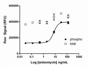 Sandwich ELISA - PhosphoTracer c-Jun (pS73) + total c-Jun ELISA kit (ab119657)