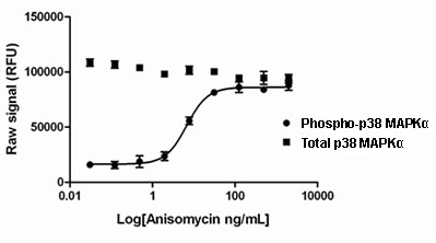 Sandwich ELISA - PhosphoTracer p38 MAPKalpha (pT180/Y182) + total p38 MAPKalpha ELISA Kit (ab119665)