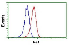 Flow Cytometry - Anti-Hes1 antibody [2D2] (ab119776)