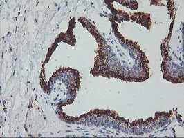 Immunohistochemistry (Formalin/PFA-fixed paraffin-embedded sections) - Anti-GOLPH2 antibody [6C9] (ab119800)