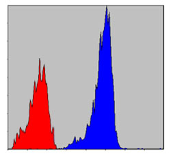 Flow Cytometry - Anti-Smad2 antibody [5G7] (ab119907)