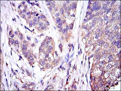 Immunohistochemistry (Formalin/PFA-fixed paraffin-embedded sections) - Anti-ERK1 antibody [1E5] (ab119933)
