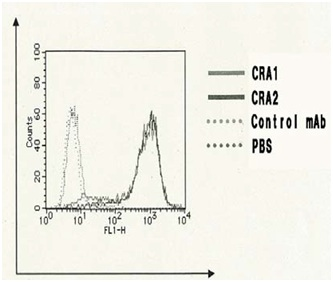 Flow Cytometry - Anti-Fc epsilon RI antibody [CRA2] (FITC) (ab122891)