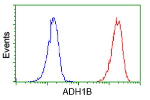 Flow Cytometry - Anti-ADH1B antibody [4F12] (ab123905)