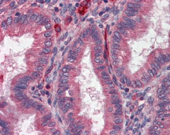 Immunohistochemistry (Formalin/PFA-fixed paraffin-embedded sections) - Anti-Acetylcholinesterase antibody (ab124275)