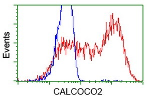 Flow Cytometry - Anti-CALCOCO2 antibody [4H5] (ab124372)