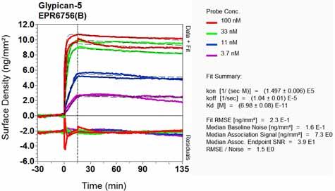 Other-Anti-Glypican 5 antibody [EPR6756(B)](ab124886)