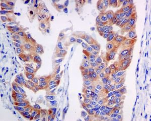 Immunohistochemistry (Formalin/PFA-fixed paraffin-embedded sections) - Anti-PI 3 Kinase Class 3 antibody [EPR5301] (ab124905)
