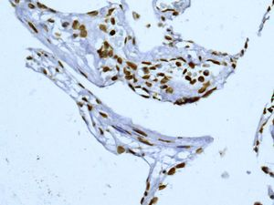 Immunohistochemistry (Formalin/PFA-fixed paraffin-embedded sections) - Anti-SUN2 antibody [EPR6557] (ab124916)