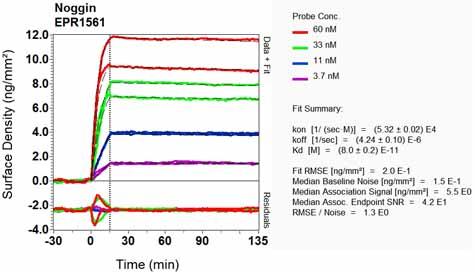 Other-Anti-Noggin antibody [EPR1561](ab124977)