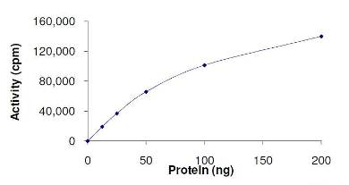 Functional Studies - HIPK2 protein (Active) (ab125553)