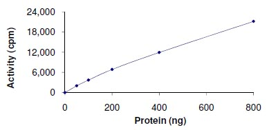 Functional Studies - VRK1 protein (Active) (ab125555)