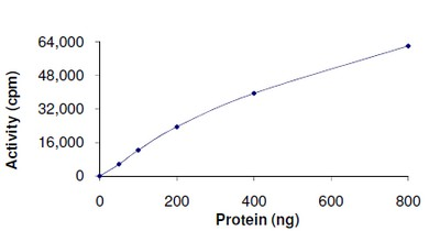 Functional Studies - PDK2 protein (Active) (ab125592)