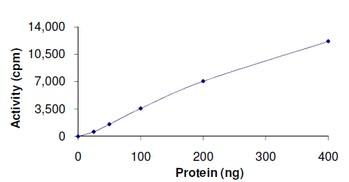 Functional Studies - PLK3 protein (ab125627)