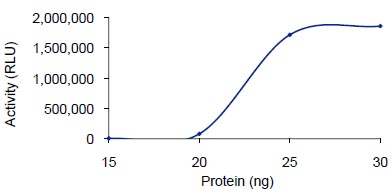 Functional Studies - PDE1B protein (Active) (ab125652)