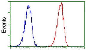 Flow Cytometry - Anti-RPA32/RPA2 antibody [9A1] (ab125681)