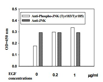 In-Cell ELISA - JNK (Thr183/Tyr185) In-Cell ELISA Kit (ab126424)