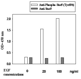 In-Cell ELISA - STAT5 (Tyr694) Human In-Cell ELISA Kit (ab126429)