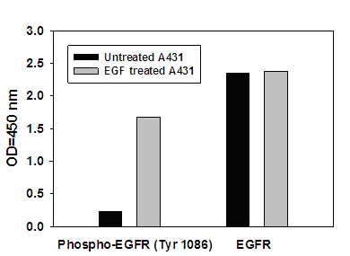 Sandwich ELISA - EGFR (pY1086) + total EGFR ELISA Kit (ab126441)