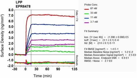 Other-Anti-LPP antibody [EPR6478](ab126608)