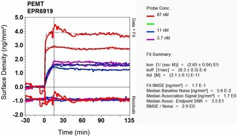 Other-Anti-PEAMT antibody [EPR6919](ab126610)