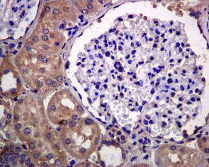 Immunohistochemistry (Formalin/PFA-fixed paraffin-embedded sections) - Anti-EDG3 antibody [EPR4541(2)] (ab126622)