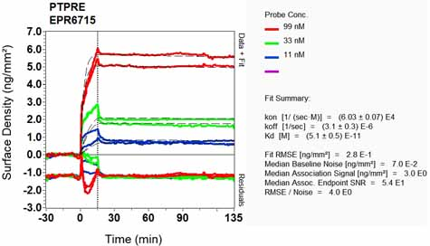 Other-Anti-PTP epsilon antibody [EPR6715](ab126788)