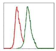 Flow Cytometry - Anti-Alkaline Phosphatase, Tissue Non-Specific antibody [2F4] (ab126820)