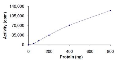 - ERK5 protein (Active) (ab126913)