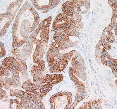 Immunohistochemistry (Formalin/PFA-fixed paraffin-embedded sections) - Anti-Hsp60 antibody [USC127-3] (ab128567)