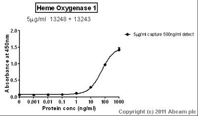 Sandwich ELISA - Heme Oxygenase 1 antibody (ab13243)