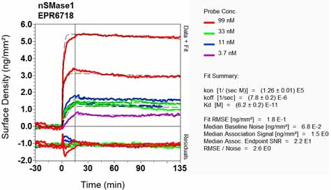 Other-Anti-nSMase antibody [EPR6718](ab131330)