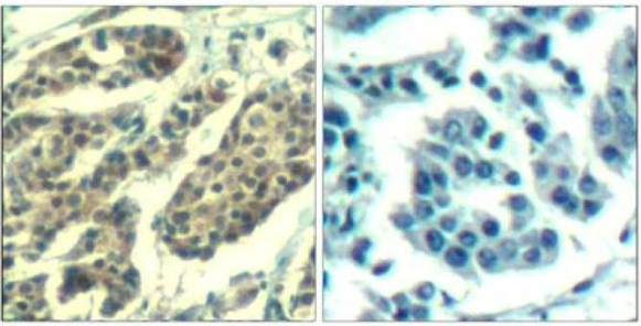Immunohistochemistry (Formalin/PFA-fixed paraffin-embedded sections) - Anti-Cyclin B1 (phospho S147) antibody (ab131502)