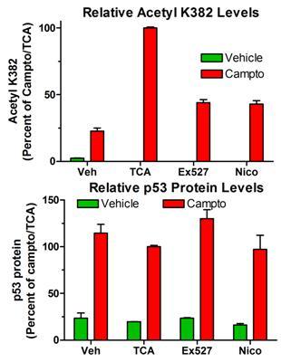 Sandwich ELISA - p53 Acetyl K382 Human ELISA Kit (ab133987)
